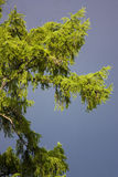Bont-boom vóór een onweersbui stock foto