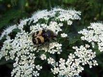 Bont insect Royalty-vrije Stock Fotografie