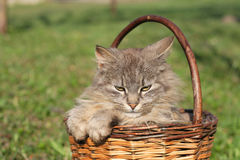 Bont kat Royalty-vrije Stock Foto