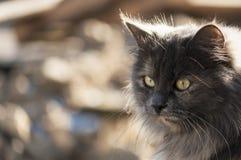 Bont kat Stock Afbeeldingen