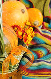 Bont pompoenen voor Halloween Stock Fotografie