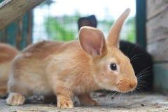 Bont rood konijntje - charmant dier stock afbeelding