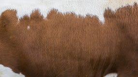 Bont van koe Stock Afbeeldingen