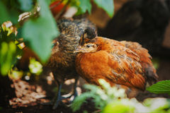 Bont vogels die onder groene bladeren verbergen Stock Foto