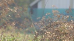 Bonte bushchatvogel die op de tak rusten stock videobeelden