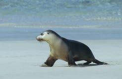 Bontverbinding die op strand lopen royalty-vrije stock foto's