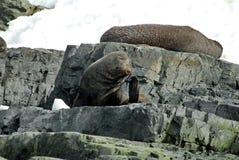 Bontverbindingen op de rotsen in Antarctica stock afbeelding