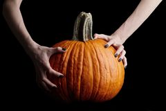 Bony hands holding halloween pumpkin on black background. Pale bony hands with black nails holding big halloween pumpkin isolated on black background, holiday royalty free stock photo