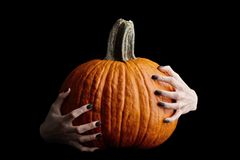 Bony hands holding halloween pumpkin on black background. Pale bony hands with black nails holding big halloween pumpkin isolated on black background, holiday stock photo