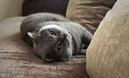Bonya the cat. On the bed Stock Photo