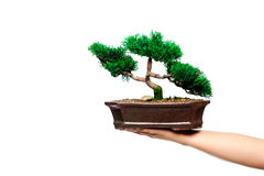 Bonzai Tree Stock Images