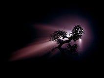 Bonzaies crépusculaires photographie stock libre de droits