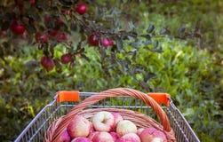 Boodschappenwagentje met appelen Royalty-vrije Stock Foto