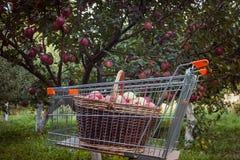 Boodschappenwagentje met appelen Stock Fotografie