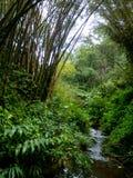 Boog door bamboe over kleine kreek wordt gevormd die hawaï Stock Foto's