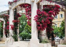 Boog met bloemen, het eiland van Corsica, Frankrijk royalty-vrije stock afbeeldingen