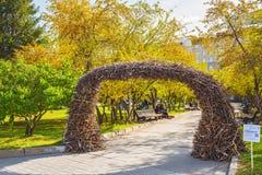 Boog van berktakken in het Park van de staat van Novosibirsk acad Royalty-vrije Stock Fotografie