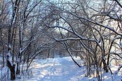 Boog van boom stock afbeeldingen
