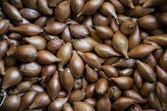 Boog voor het planten Verse uien Achtergrond van uien stock foto's