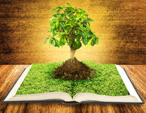 Book. Tree growing from a book on wooden table Royalty Free Stock Image