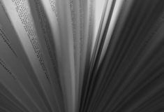 Book reading. Open book words blurred Royalty Free Stock Photo