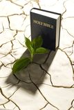 Book. Bible & sprout on the desert ground Stock Photography