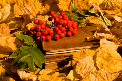 Book And Red Berries Royalty Free Stock Images