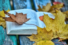 Book and autumn leaves Royalty Free Stock Images