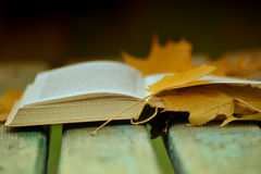 Book and autumn leaves Stock Images