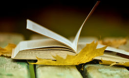 Book and autumn leaves Stock Photo