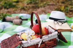 Book and basket with food on plaid picnic in park Royalty Free Stock Photography