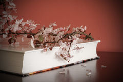 Book and blossom branch Royalty Free Stock Photography