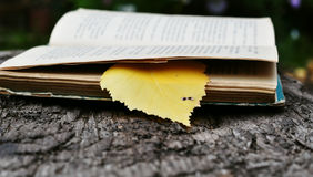 Book with a bookmark. Open book with a yellow leaf stock image