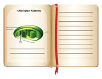 Book with chloroplast anatomy on page Stock Photo