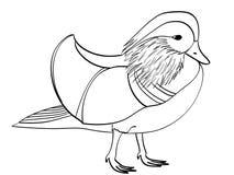Book coloring for children. Raster bird, Mandarin duck, goose. Book coloring for children. Raster illustration bird, Mandarin duck, goose royalty free illustration
