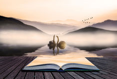 Book concept Beautiful romantic image of swans on misty lake wit Stock Image