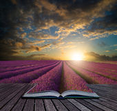 Book concept Vibrant Summer sunset over lavender field landscape Stock Photography