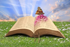Book of creation bible. Concept photo of book of creation bible showing butterfly on summer flower Royalty Free Stock Photography