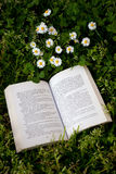 Book and daisies Royalty Free Stock Photography