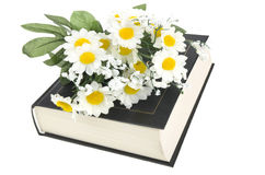 Book and daisy Stock Image