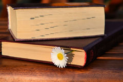 Book and daisy flower Stock Image
