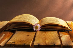 Book daisy open old vintage wooden board flower grunge dirty vin Stock Photos