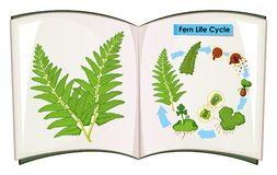 Book of fern life cycle. Illustration Stock Photos