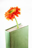 Book with flower. On white Royalty Free Stock Images