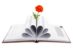 Book and flower Royalty Free Stock Image