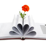 Book and flower Royalty Free Stock Photography