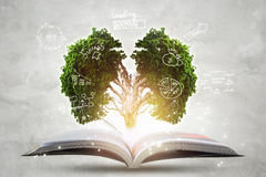 Book of growing knowledge with brains big tree. Stock Photos