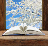 Book heart shape page open window spring flowering cherry Stock Photos