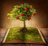 Book of knowledge. Tree of knowledge growing out of book Royalty Free Stock Photo