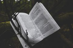 Book and nature. The book lies on a bush and behind them is a fairy-tale beauty Stock Images